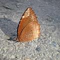 在路上發現的蝴蝶