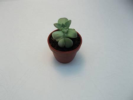 辦公室療癒小物可愛石蓮花迷你小品盆栽