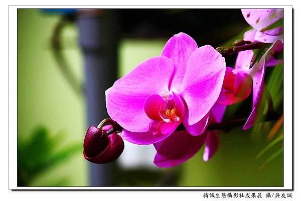 0061吳友誠(21).jpg