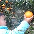 台中谷關賽德克公主露營區每一年春假期間都有舉辦''半日遊-採果樂行程