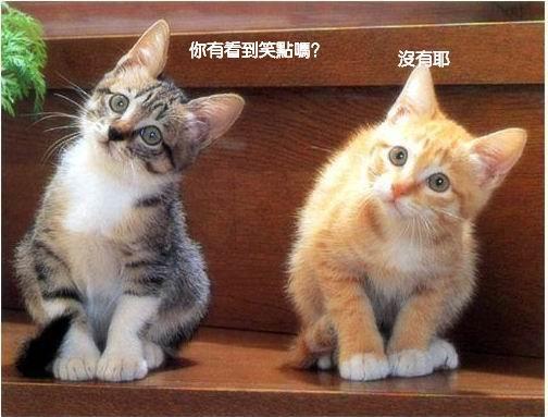 雙貓-沒笑點啊~.JPG
