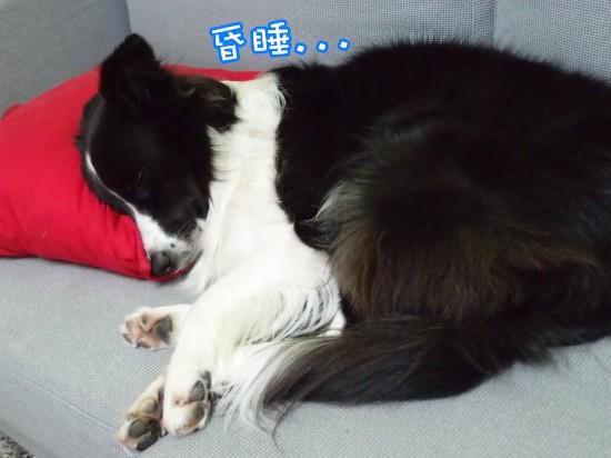 20111001_36小.jpg