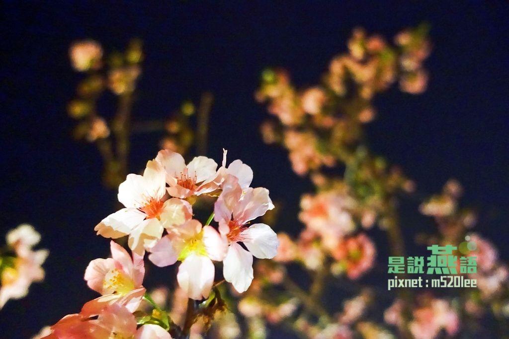 IMG_9690.JPG