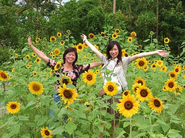 4-7月夏季向日葵花季