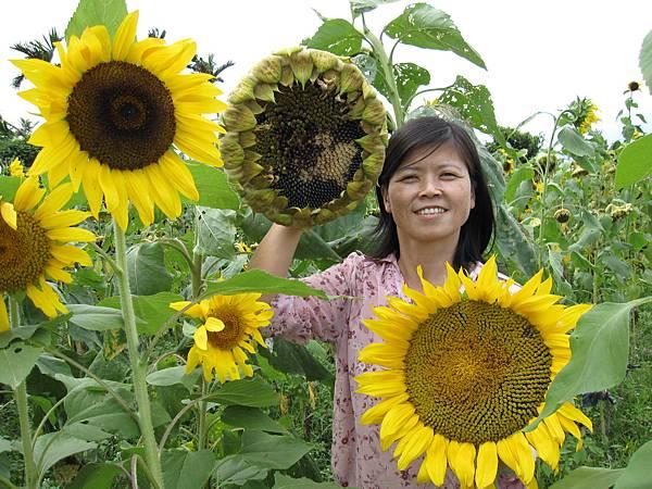 3-7月比臉大2倍的向日葵