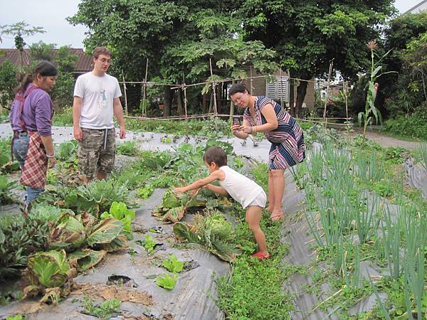 來自法國的華僑現採有機蔬菜