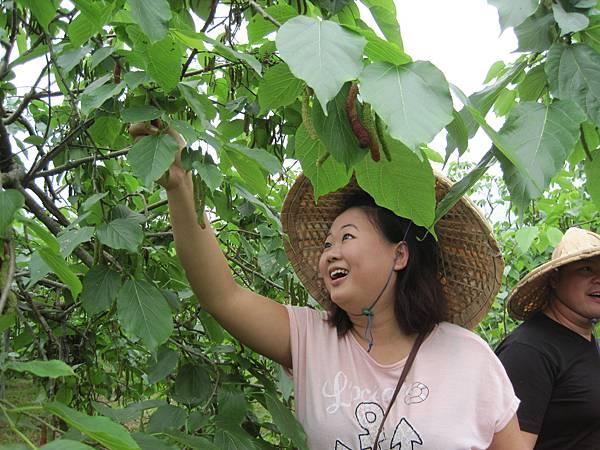 來自馬來西亞的由遊遊客採果樂