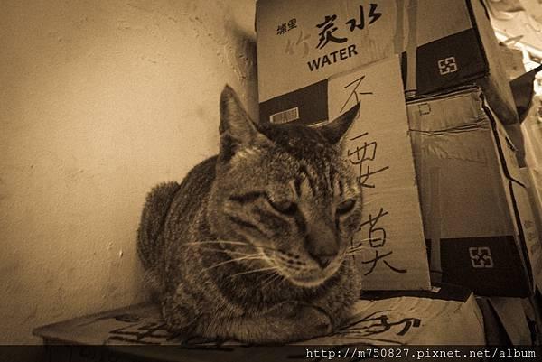 蘭嶼 嵐羽_170530_0205.jpg