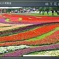 Taipei-flower-05.JPG