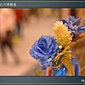 Taipei-flower-26.JPG