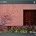 Taipei-flower-16.JPG