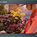 Taipei-flower-29.JPG