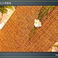 Taipei-flower-25.JPG