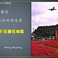 Taipei-flower-03.JPG