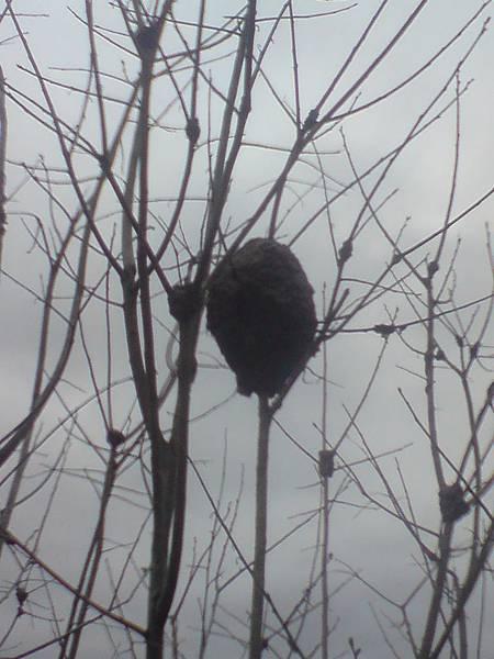 ant nest01.JPG