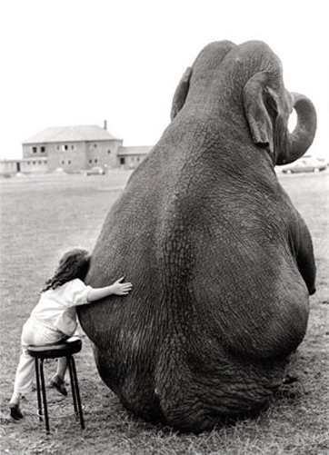 freinds,b,w,animal,love,bw,child,elephant-335a205169b5abb2113148947c4ccc37_h.jpg