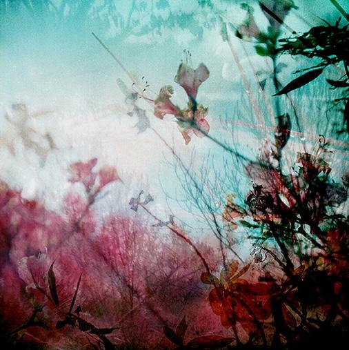 flickrseri*4.jpg