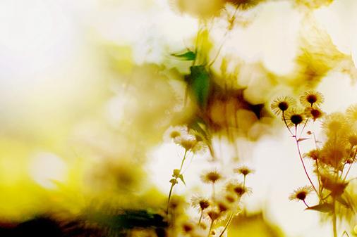 flickr sea of blankets2拷貝.jpg