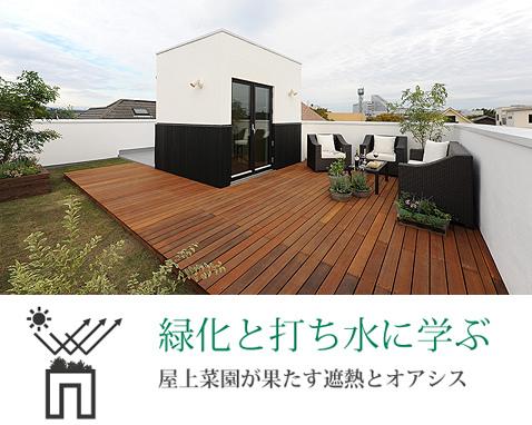綠色屋頂打造隔熱效果
