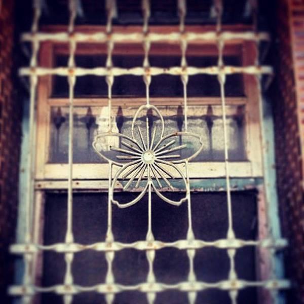櫻花圖樣的窗花,小巧細緻