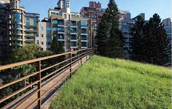 薄層式,綠屋頂,綠建築,屋頂綠化,建築,頂樓