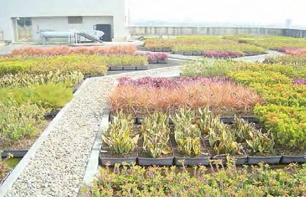 盆缽式,盆栽,綠屋頂,綠化,綠建築,屋頂綠化,環保