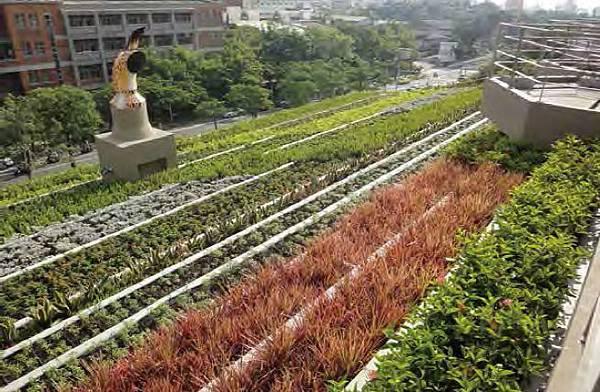 綠屋頂,綠化,綠建築,盆缽式,盆栽,植物