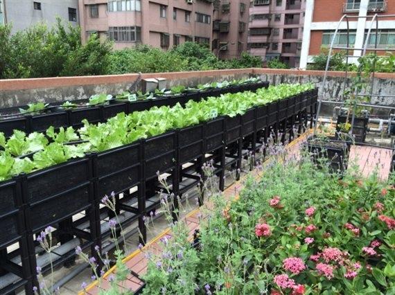 新北市,政府,綠化,綠建築,屋頂綠化,環保,盆栽