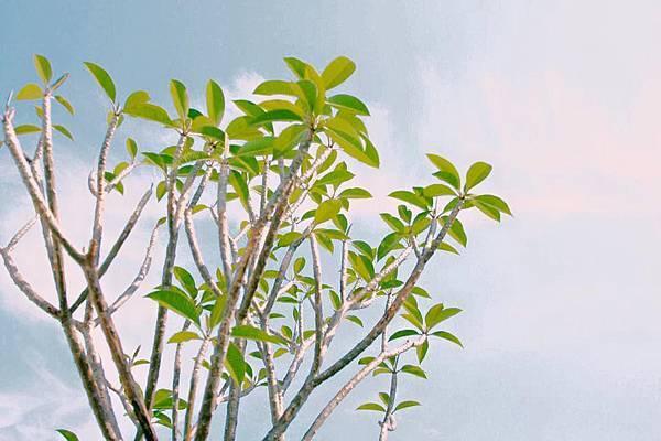 屋頂綠化,綠建築,樹,草坪,頂樓,上銘建設,幸福悅,綠化,環保
