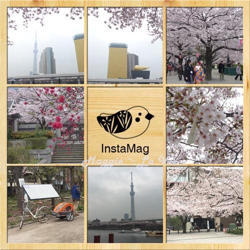 IMG_4495-1.JPG
