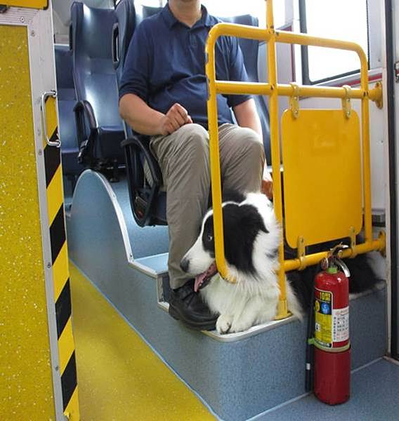 寵物巴士路線圖-BIBO小妞妞06.jpeg