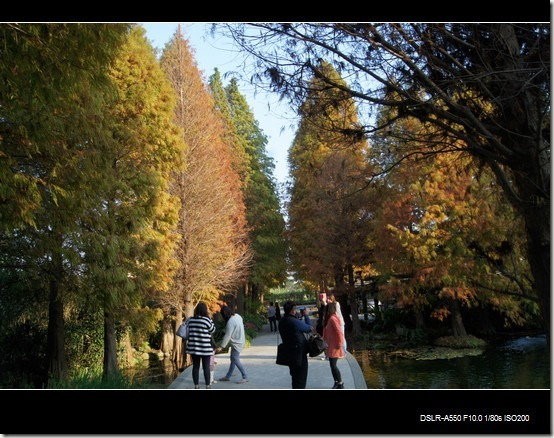 彰化菁芳園_09