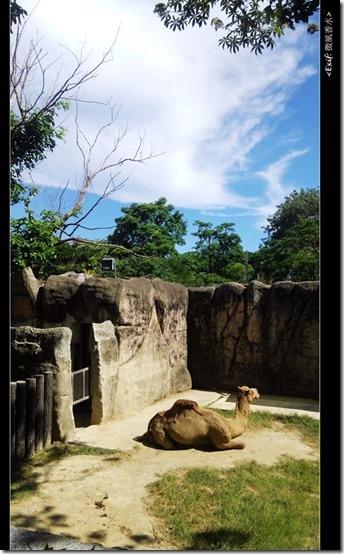 高雄壽山動物園_07