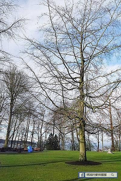加拿大風情【和平公園/伊莉莎白女皇公園】春暖花開櫻花美景處處