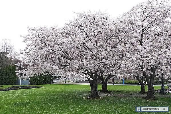 ◆加拿大風情畫【維多利亞-布查德花園】四月櫻花季~百花爭艷美不勝收