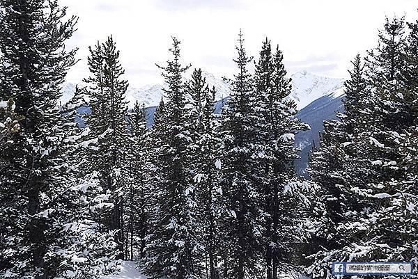 加拿大風情畫【班夫小鎮/弓河瀑布/驚奇角/硫磺山】雪國世界好美啊!