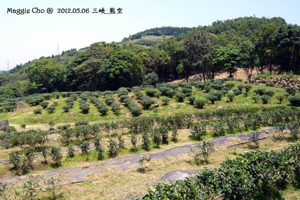 2012-0506-120725(北)三峽-熊空.jpg