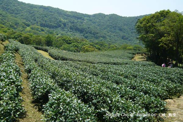 2012-0506-121928(北)三峽-熊空.jpg