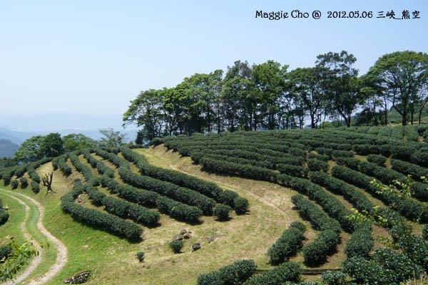 2012-0506-122856(北)三峽-熊空.jpg