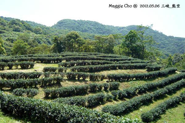 2012-0506-123331(北)三峽-熊空.jpg