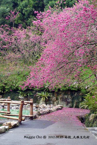 2012-0225-115501(投)魚池-九族文化村.jpg