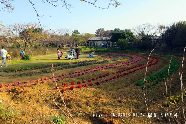 2015_0124_154234觀音_青林農場.JPG