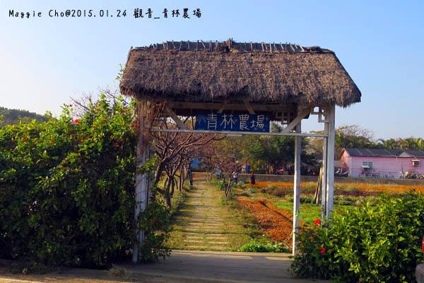 2015_0124_154822觀音_青林農場.JPG