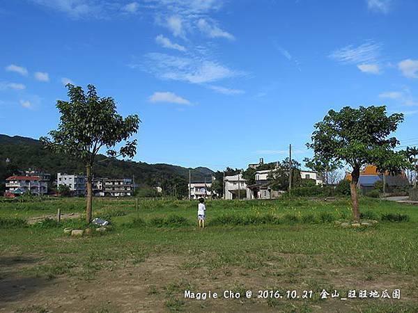 2016_1001_150834金山_旺旺地瓜園.JPG