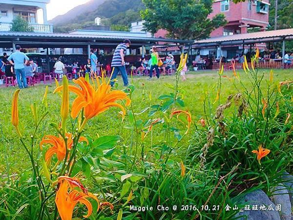 2016_1001_165240金山_旺旺地瓜園.JPG