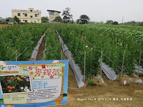 2018_0414_120029觀音_向陽農場.JPG