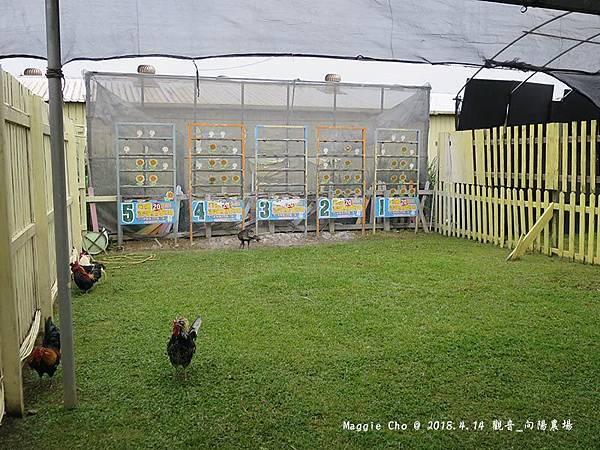 2018_0414_111805觀音_向陽農場.JPG