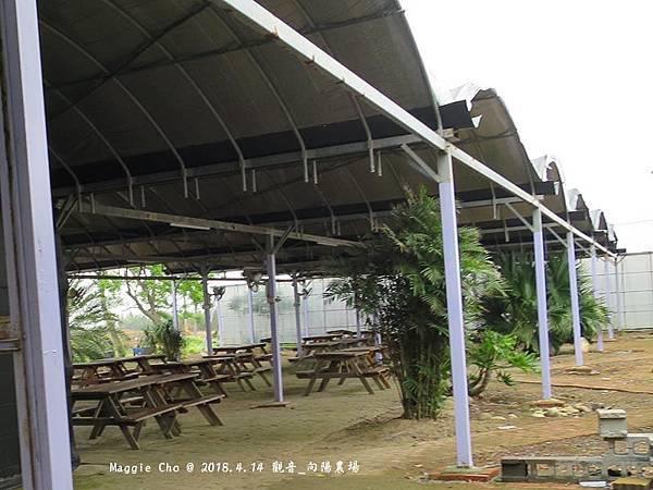 2018_0414_111843觀音_向陽農場.JPG