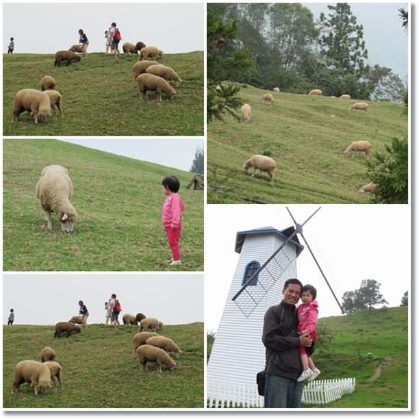 霏霏與羊咩咩2.jpg