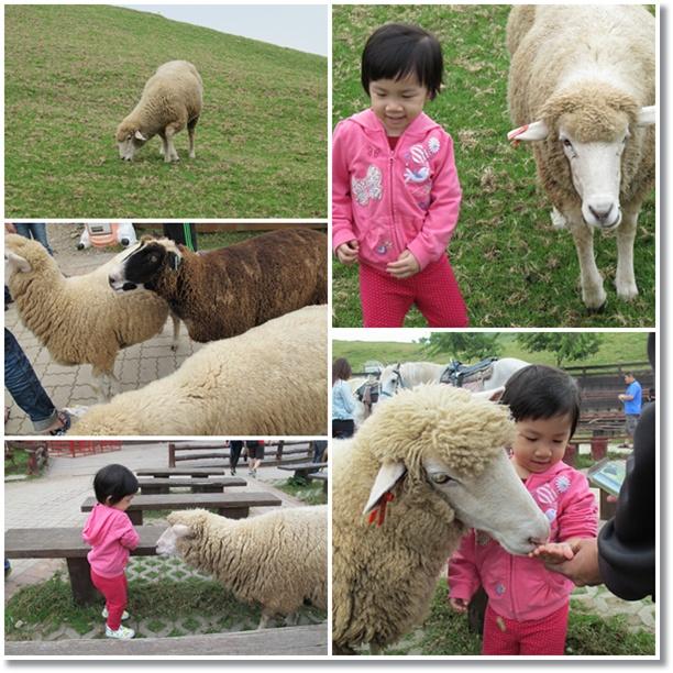 霏霏與羊咩咩1.jpg
